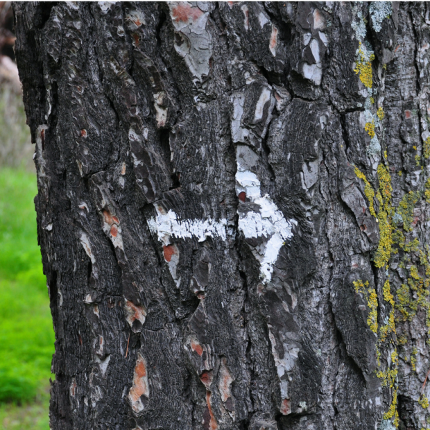 Midlife Monday - Tree Arrow